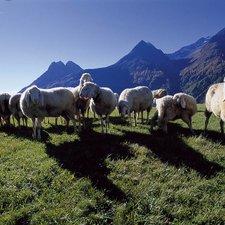 © Ötztal Tourismus, Foto: Matthias Burtscher