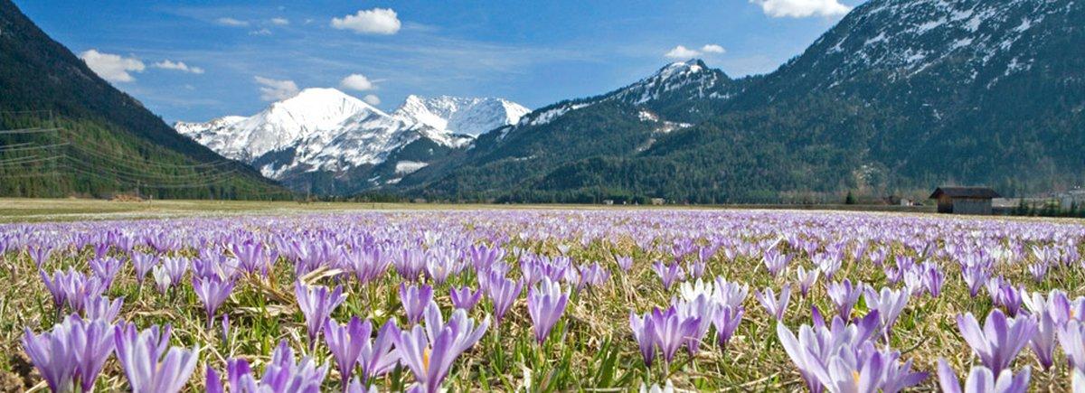 spring in tyrol tyrol austria