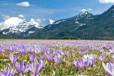 Spring in Tyrol